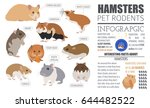 Stock vector hamster breeds icon set flat style isolated on white pet rodents collection create own 644482522
