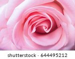 Texture Of Pink Rose In Closeup