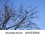 Abstract Dead Tree With Blue Sky