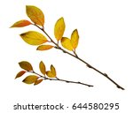 autumn twigs with yellow leaves ... | Shutterstock . vector #644580295