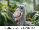 balaeniceps rex | Shutterstock . vector #644609188