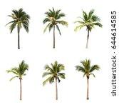 Coconut Trees White Background  - Fine Art prints