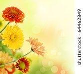 colorful chrysathemum bouquet... | Shutterstock . vector #64462849