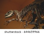 full size skeleton of the... | Shutterstock . vector #644659966