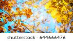 autumn landscape. autumn oak... | Shutterstock . vector #644666476