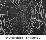 spider web covered with... | Shutterstock . vector #64468480
