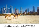 The Camels On Jumeirah Beach...