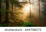 golden rays of sunlight falling ...   Shutterstock . vector #644708272