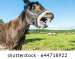 Funny Laughing Donkey Face