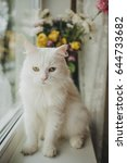 white cat lies   sitting on a... | Shutterstock . vector #644733682