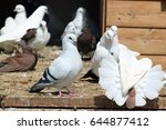 White Pigeons In A Wooden...