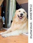 dog sleeping closeup you head | Shutterstock . vector #644878912