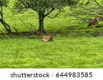 herd of mother elk with spotted ... | Shutterstock . vector #644983585