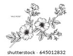 Stock vector wild rose flowers drawing and sketch with line art on white backgrounds 645012832