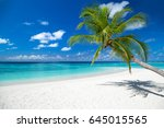 tropical paradise beach with... | Shutterstock . vector #645015565
