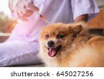 close up of female veterinarian ... | Shutterstock . vector #645027256
