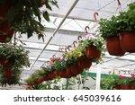 greenhouse farming. garden