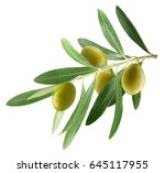 branch with olives isolated on... | Shutterstock . vector #645117955