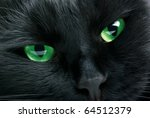 Muzzle Closeup Of Black Cat
