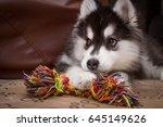 Small photo of My Dog Ayra Playing