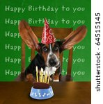 a basset hound with cake - stock photo