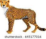 vector african cheetah ... | Shutterstock .eps vector #645177016