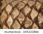 palm tree texture background | Shutterstock . vector #645222886