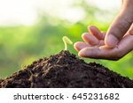 seedlings are growing from... | Shutterstock . vector #645231682