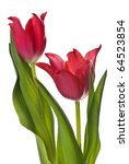 Two Red Tulips On A White...