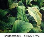 green leaves   Shutterstock . vector #645277792