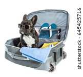 french bulldog with glasses... | Shutterstock . vector #645425716