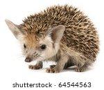 Stock photo porcupine on a seemless backround 64544563
