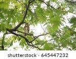 owl | Shutterstock . vector #645447232