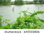 Green Tree Leaf Beside A Pond ...