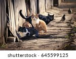 A Group Of Homeless Cats On Th...