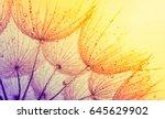 abstract dandelion flower... | Shutterstock . vector #645629902