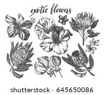 ink hand drawn set of tropical...   Shutterstock .eps vector #645650086