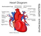 medical education chart of... | Shutterstock .eps vector #645657856