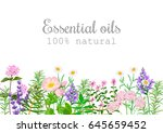 popular essential oil plants... | Shutterstock .eps vector #645659452