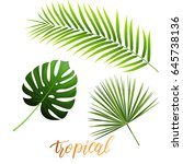 tropical leaves of monstera ... | Shutterstock .eps vector #645738136