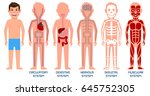 five systems of human body.... | Shutterstock .eps vector #645752305