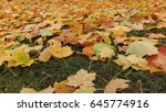 maple leaves fall on the grass. | Shutterstock . vector #645774916