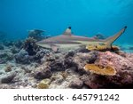 blacktip reef shark ... | Shutterstock . vector #645791242