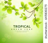 fresh tropical green leaves on... | Shutterstock .eps vector #645830275