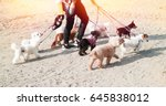 Stock photo walkings the pack dogs 645838012