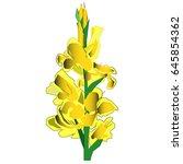 yellow gladiolus flower vector... | Shutterstock .eps vector #645854362