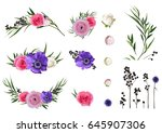 ranunculus flower  rose ... | Shutterstock .eps vector #645907306