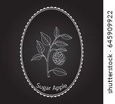 sugar apple  annona squamosa  ... | Shutterstock .eps vector #645909922