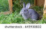 Stock photo gray rabbit in front of the rabbit barn 645930832