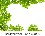green leave on white background   Shutterstock . vector #64596058